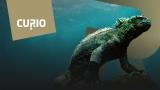 Curio tuo laatudokumentteja Ruutu+-tilaajille